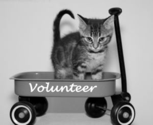 Kitten Volunteer Graphic
